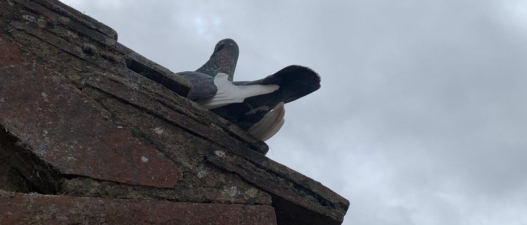 Can bird droppings damage a roof?
